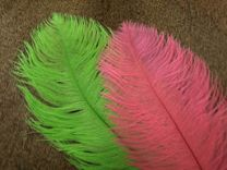 Ostrich Plumes
