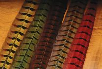 Righneck Pheasant Center Tails
